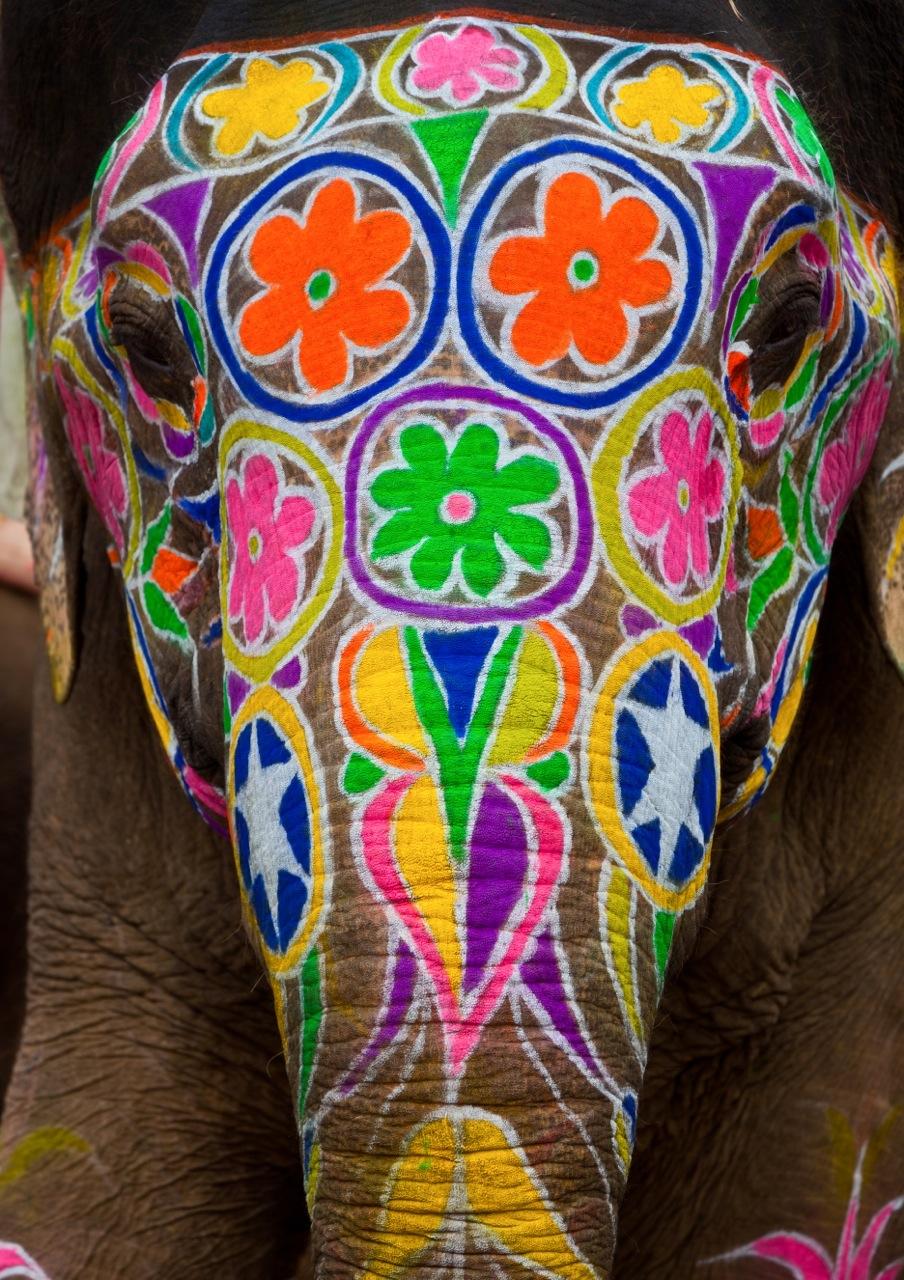 Painted Elephants on Pinterest   Painted Indian Elephant ...